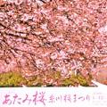 Photos: 今年、最初の桜の華を・・・