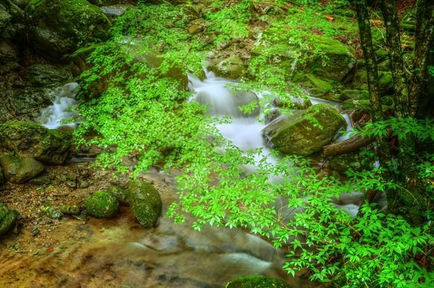 Green Forest ~青もみじの渓流~
