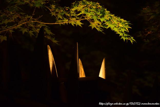 0149 竹のお庭