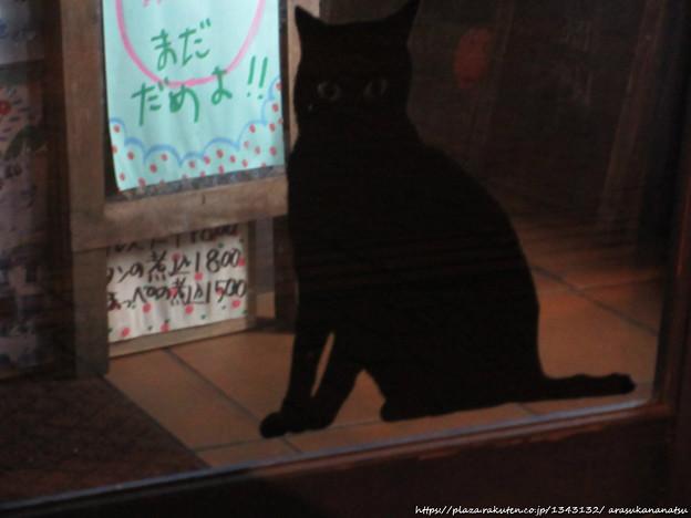 0060 貼り黒ネコ