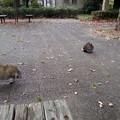 公園のネコ2