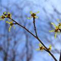 写真: 春を告げる、小さな花
