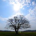 Photos: はるにれの木2