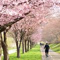 写真: 春の公園