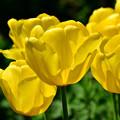 写真: 春の庭1