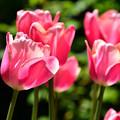 写真: 春の庭2
