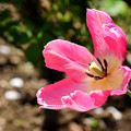 写真: 春の庭4