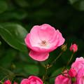 写真: 誰がために君は咲く