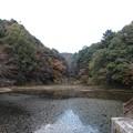 秋の猩々池