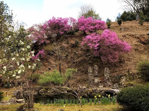 長福寺のツツジ