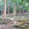 Photos: 林間のテントサイト