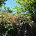 しらびそ高原の石碑