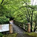 テントサイトへの橋