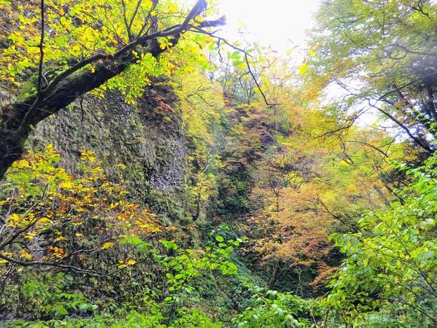 シワガラの滝の紅葉