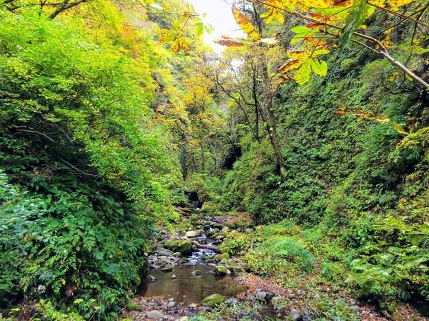 シワガラの滝まで700m