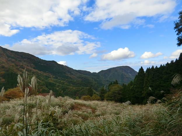 ハイキング道のススキ野原