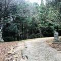 Photos: サムハラ神社の狛犬