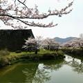 Photos: 篠山城 お濠の桜