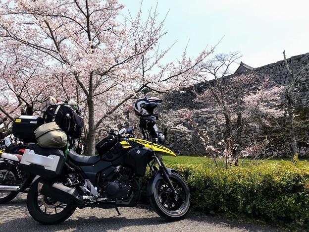 篠山城の春