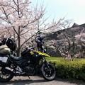 Photos: 篠山城の春