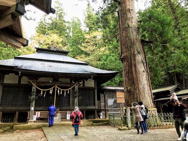 日枝神社 拝殿とご神木