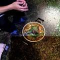 Photos: 墓ノ木自然公園キャンプ場のキャンプ飯 猪鍋