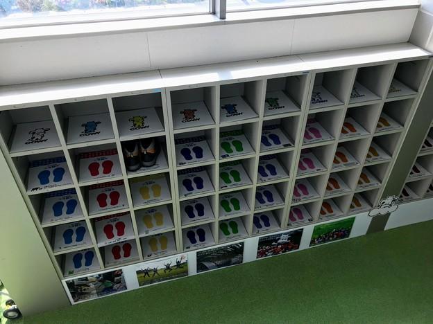 豆知識が詰まった靴箱