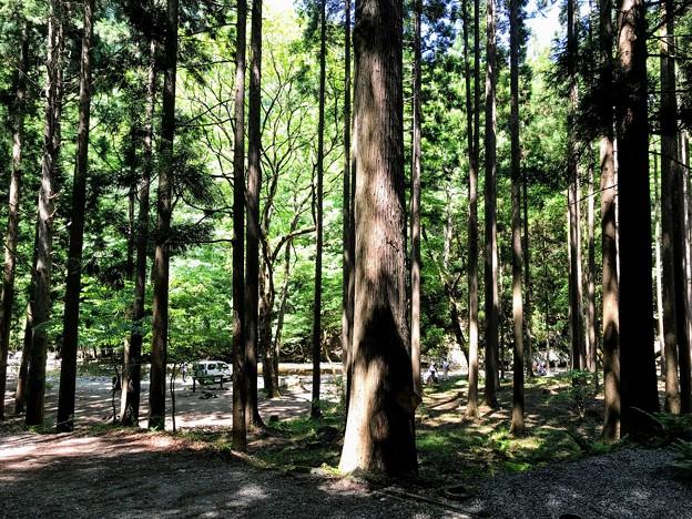 赤西森林広場