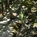 橋の上に野ウサギの赤ちゃん