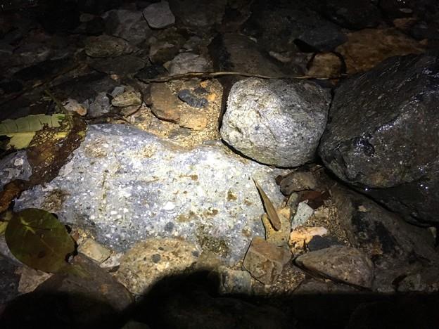 Photos: 小魚 夜は逃げない