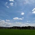 写真: 青田生々