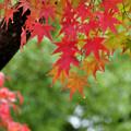 写真: 雨もまたヨシ! 初紅葉