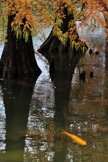晩秋の池畔