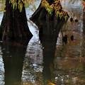 写真: 晩秋の池畔
