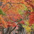 湖畔の秋2