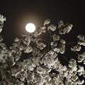 写真: 春の月
