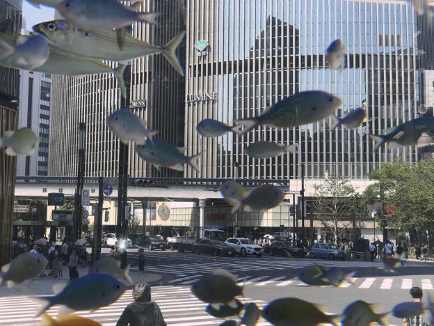 銀座を飛ぶ魚1