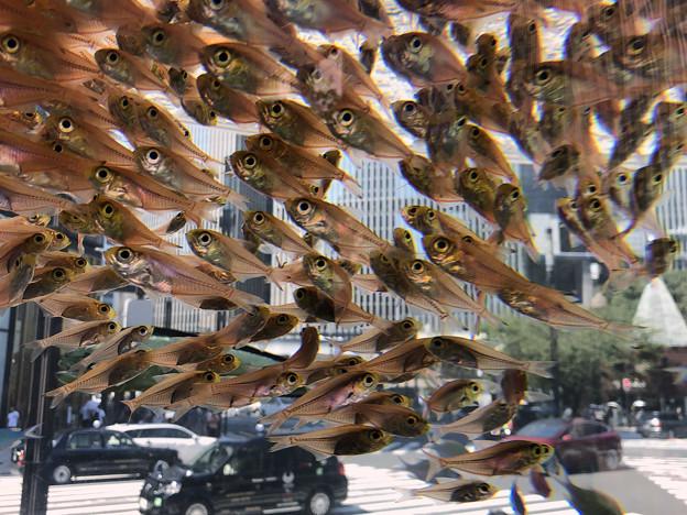銀座を飛ぶ魚2