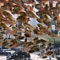 写真: 銀座を飛ぶ魚2