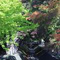 緑の紅葉回廊