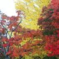 Photos: 秋色々