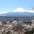 新倉富士浅間神社の桜と富士