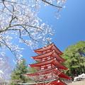 忠霊塔と桜
