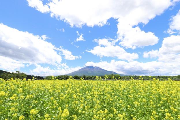 キカラシと富士