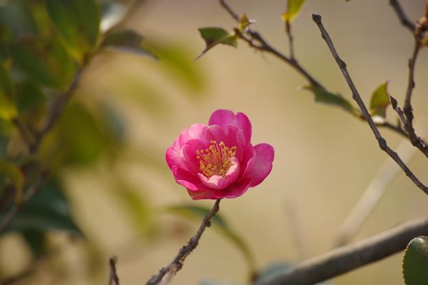 「春(恋)の予感」