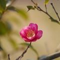 写真: 「春(恋)の予感」