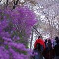 Photos: 「春、誘う」