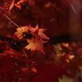 写真: 「秋色」