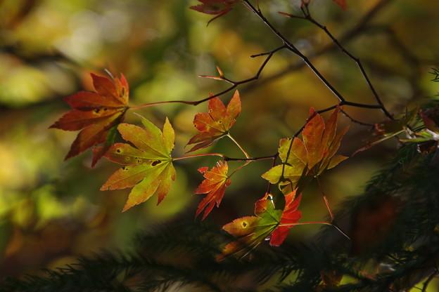 「秋、彩々と。」