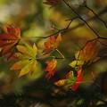 Photos: 「秋、彩々と。」